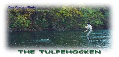 Tulpehocken creek for Blue marsh lake fishing